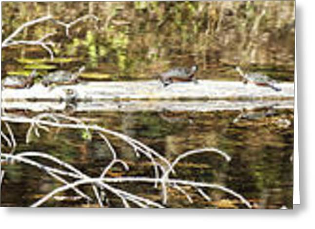 Sunbathing Greeting Cards - Turtles on a Log Greeting Card by Thomas Young