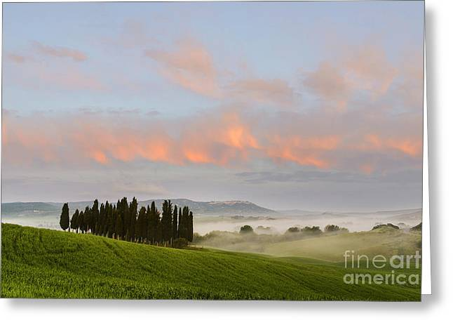 Tuscan Hills Greeting Cards - Tuscan cypresses Greeting Card by Yuri Santin
