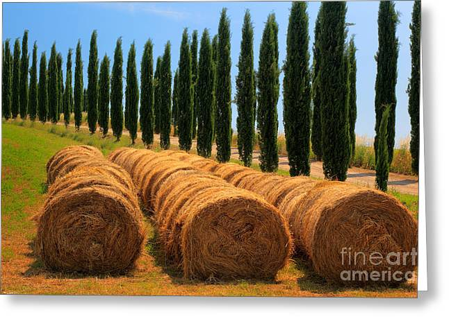 Rural Scenery Greeting Cards - Tuscan Hay Greeting Card by Inge Johnsson