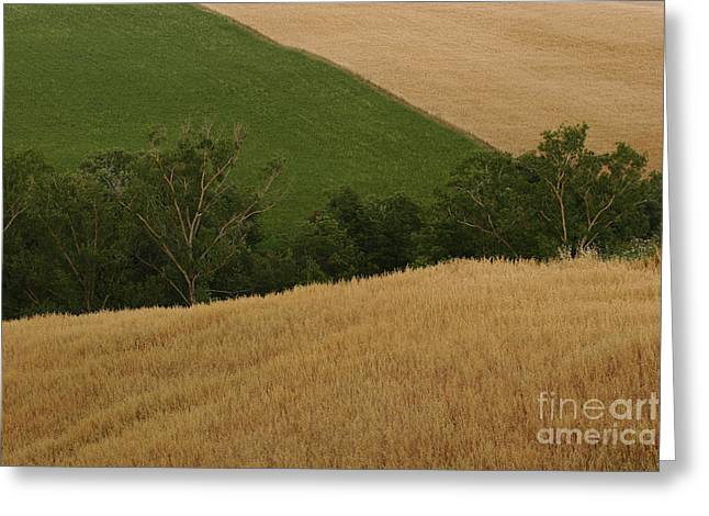 Landscape Framed Prints Greeting Cards - Tuscan Countryside Greeting Card by John Tsumas