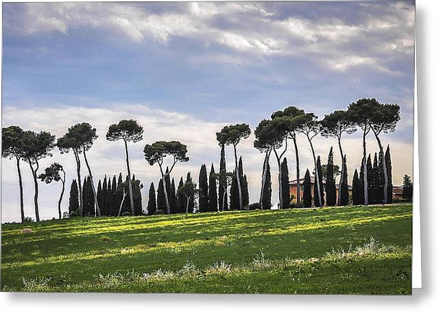 Umbrella Pine Greeting Cards - Tuscan Landscape Greeting Card by Marion McCristall