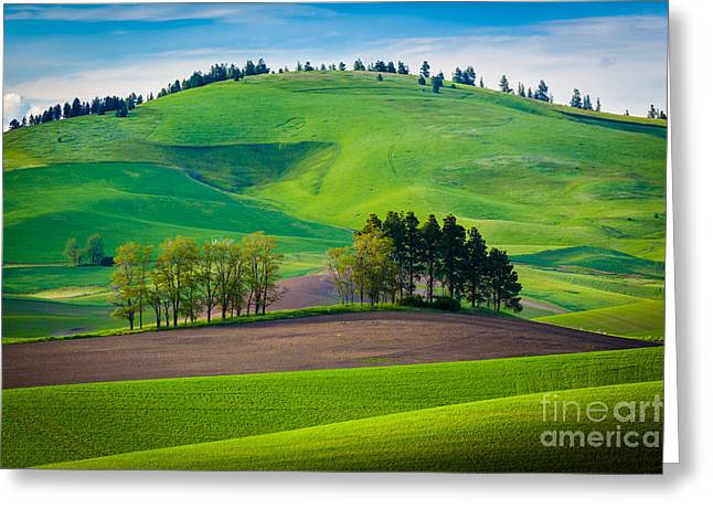 Rural Scenery Greeting Cards - Tuscan Palouse Greeting Card by Inge Johnsson