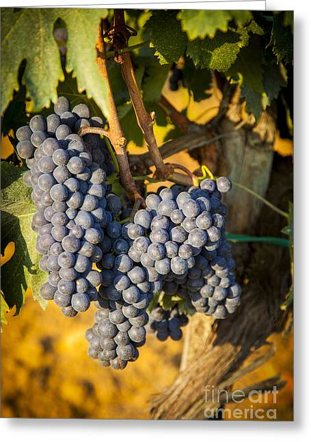 Chianti Greeting Cards - Tuscan Vineyard Greeting Card by Brian Jannsen