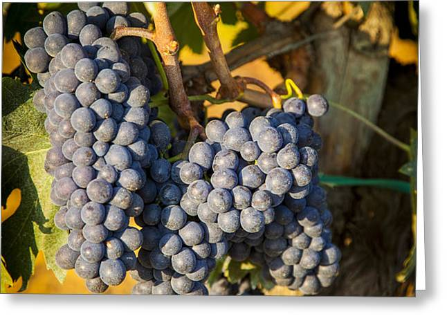 Tuscan Vineyard Greeting Card by Brian Jannsen