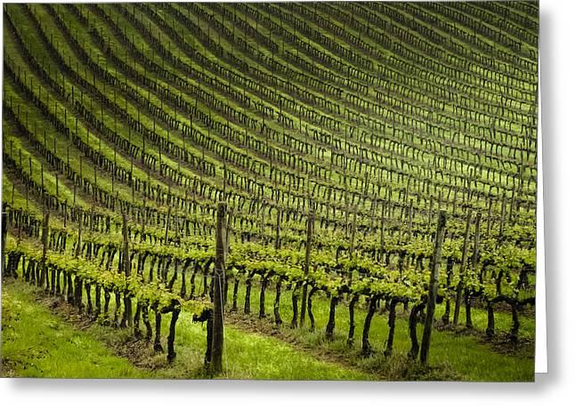 Tuscan Vineyard Series 1 Greeting Card by John Pagliuca