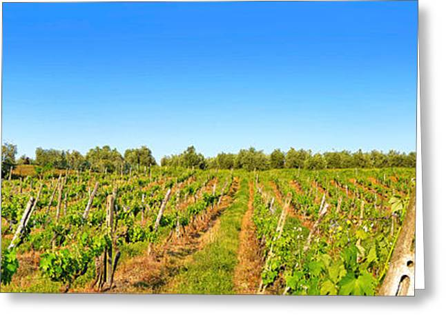 Italian Sunset Greeting Cards - Tuscany Vineyard Greeting Card by JR Photography
