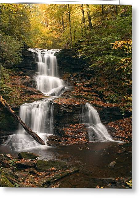 Tuscarora Greeting Cards - Tuscarora Under Newfallen Leaves Greeting Card by Gene Walls