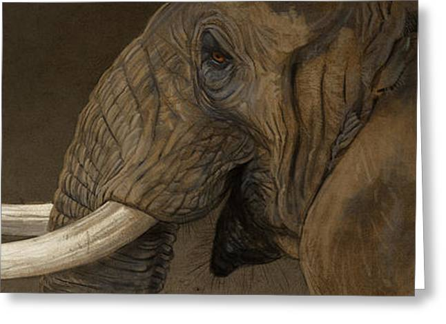 Tusker Greeting Card by Aaron Blaise
