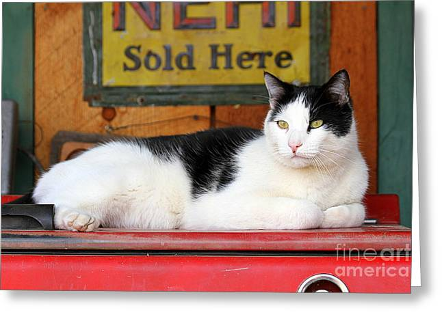 Catherine White Greeting Cards - Tuxedo Cat at Old Gasoline Station Greeting Card by Catherine Sherman