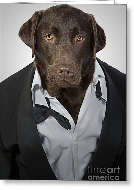 Tuxedo Greeting Cards - Tuxedo Dog Greeting Card by Justin Paget