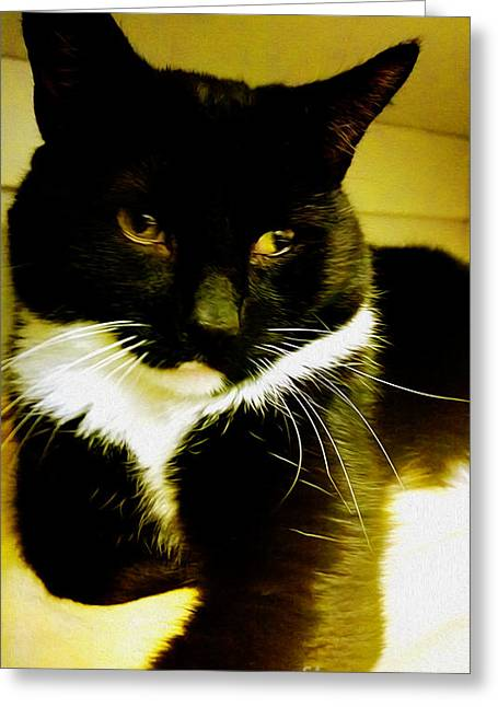 Tuxedo Greeting Cards - Tuxedo Portrait Greeting Card by Cheryl Young