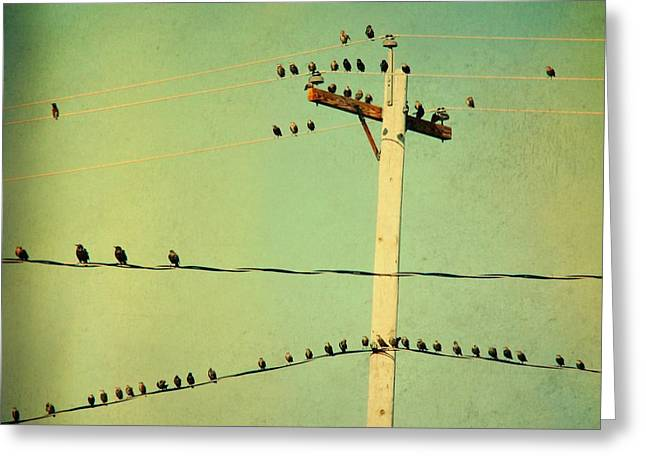 Retro Bird Greeting Cards - Tweeters Tweeting Greeting Card by Gothicolors Donna Snyder
