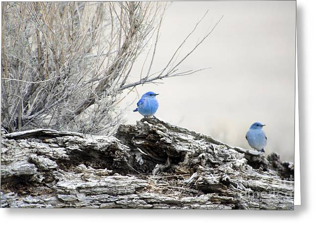 Bluebird Greeting Cards - Twice as Happy Greeting Card by Deby Dixon