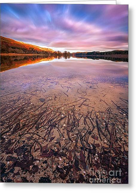 Moonrise Greeting Cards - Twigs And Leaves  Greeting Card by John Farnan