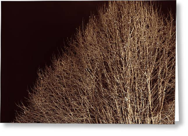 Grungy Greeting Cards - Twigs Greeting Card by Wim Lanclus
