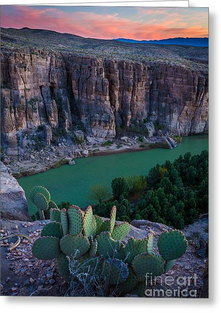Rio Grande Greeting Cards - Twilight Cactus Greeting Card by Inge Johnsson