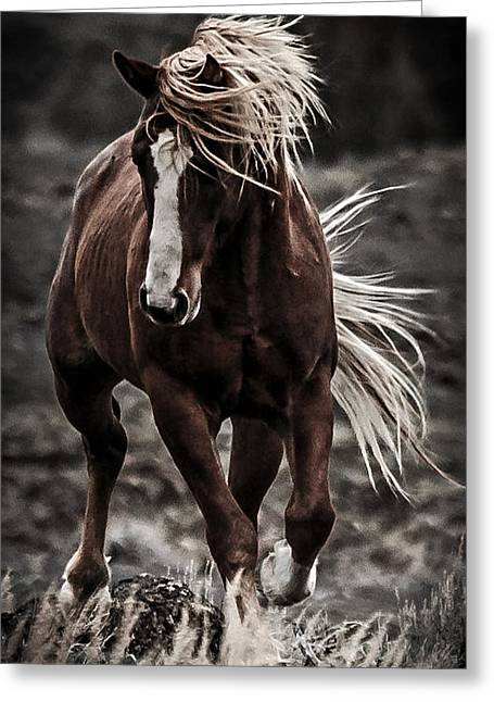 Forelock Photographs Greeting Cards - Twilight Challenge D4461 Greeting Card by Wes and Dotty Weber