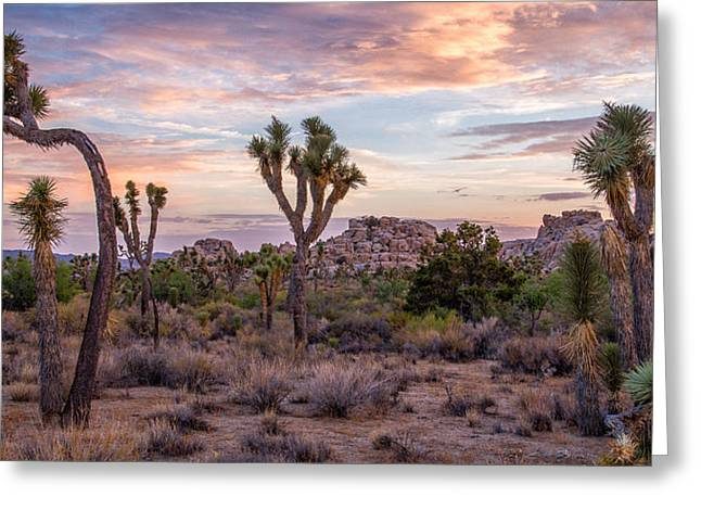 Featured Images Greeting Cards - Twilight comes to Joshua Tree Greeting Card by Peter Tellone