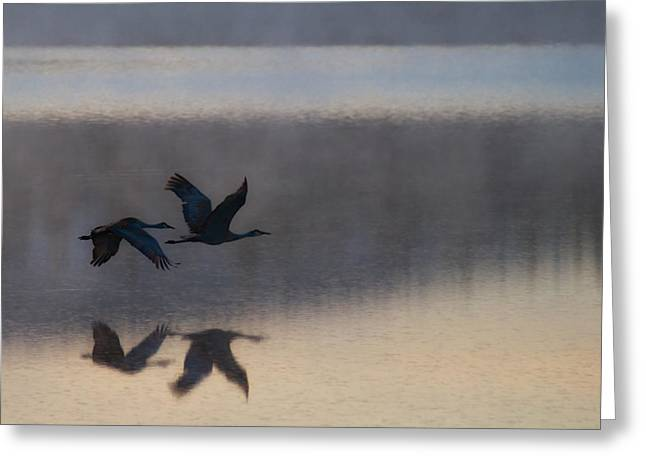 Creative Greeting Cards - Twilight Flight Greeting Card by Gary Migues