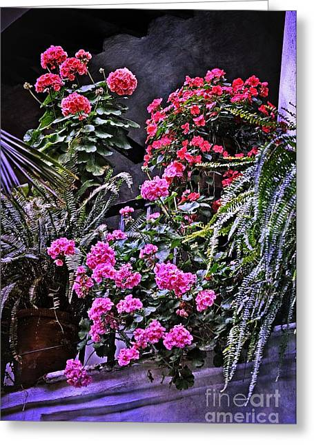 Red Geraniums Greeting Cards - Twilight in the Courtyard Greeting Card by Mary Machare