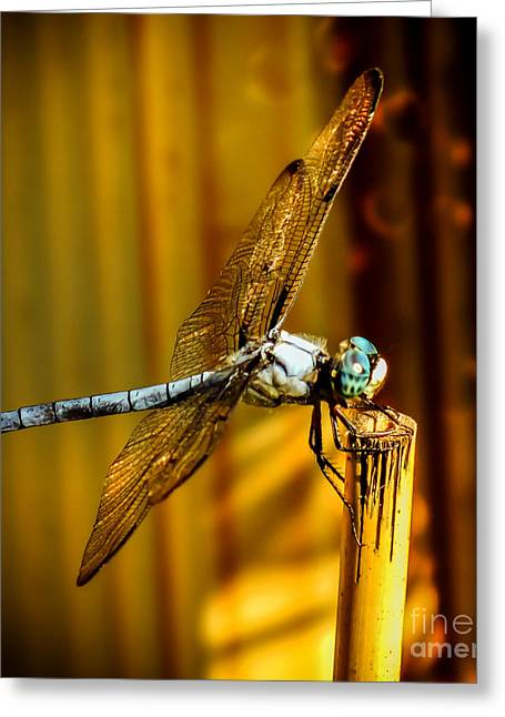 Dragonflies Greeting Cards - Twilight Greeting Card by Karen Wiles