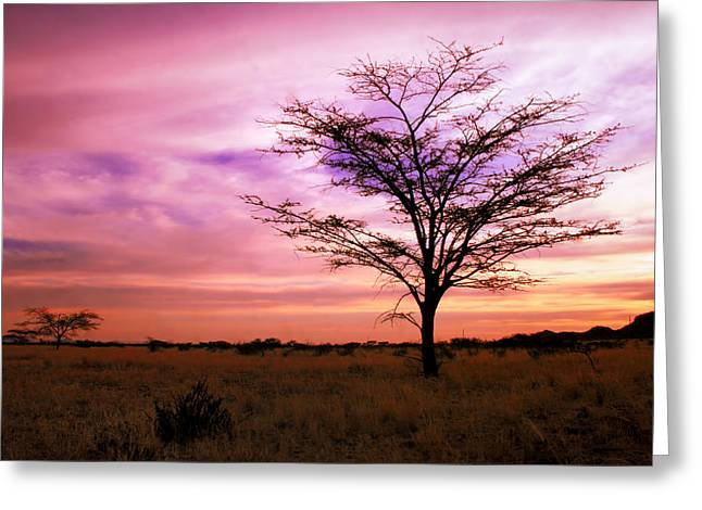 Eco-tourism Greeting Cards - Twilight on the Savanna Greeting Card by A Rey