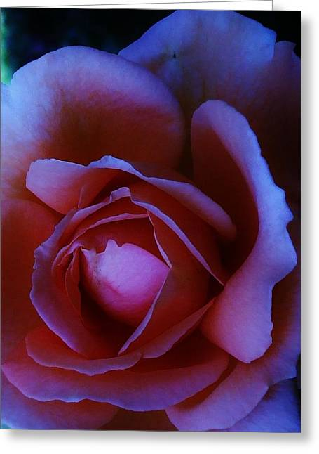 Michel Croteau Greeting Cards - Twilight rose Greeting Card by Michel Croteau