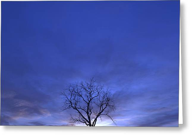 Gnarly Greeting Cards - Twilight Tree Greeting Card by John Stephens