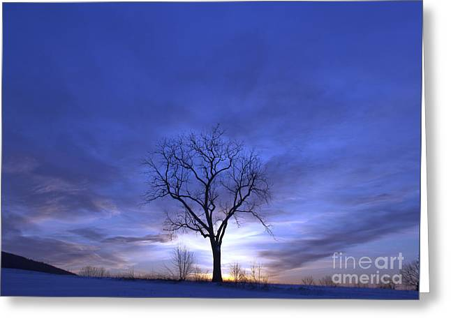 Twilight Tree Greeting Card by John Stephens