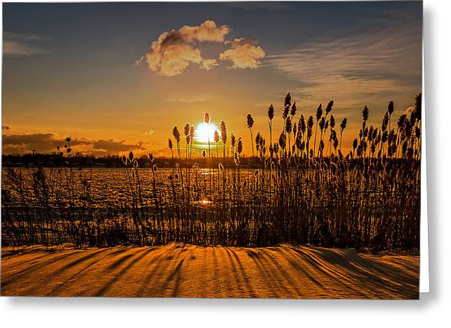 Western New York Greeting Cards - Twilight Winter Reeds along the Niagara Greeting Card by Chris Bordeleau