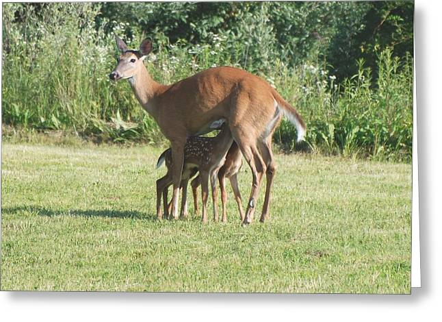 Twin Fawns Nursing Greeting Card by Amy Porter