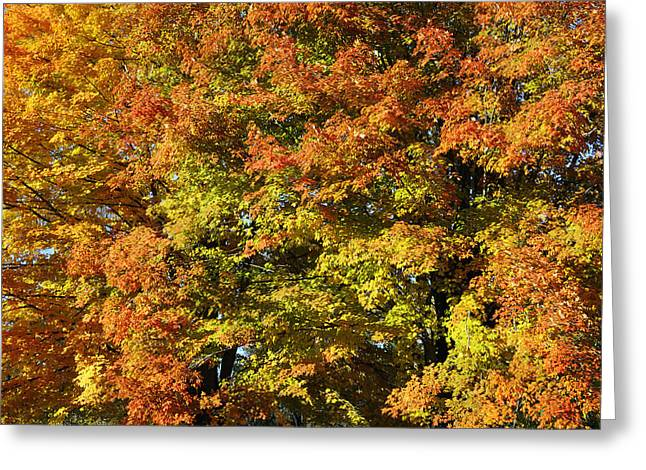Changing Of The Seasons Greeting Cards - Twin Maples Greeting Card by Luke Moore