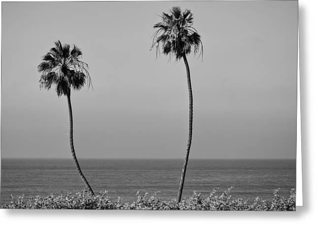 T Street Beach Greeting Cards - Twin Palms Black and White Greeting Card by Richard Cheski