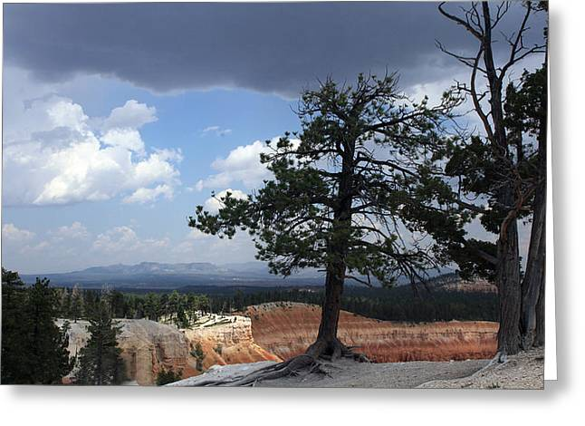 Ponderosa Greeting Cards - Twin Pines Greeting Card by Joseph G Holland