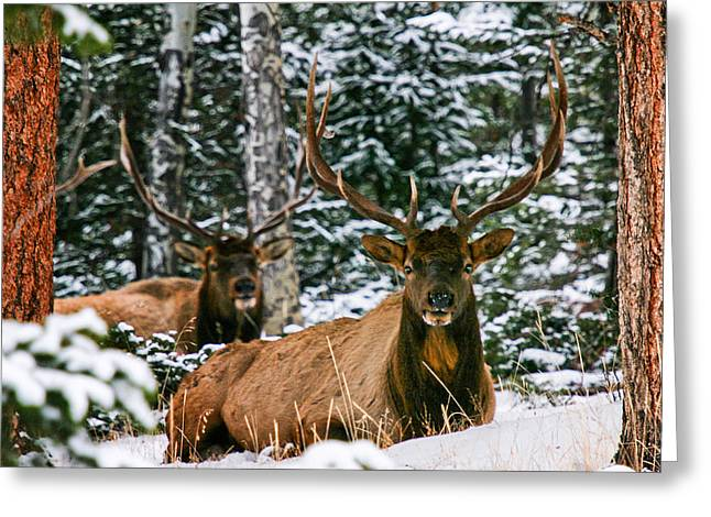 Rocky Mountain National Park Greeting Cards - Twin Racks Greeting Card by Juli Ellen