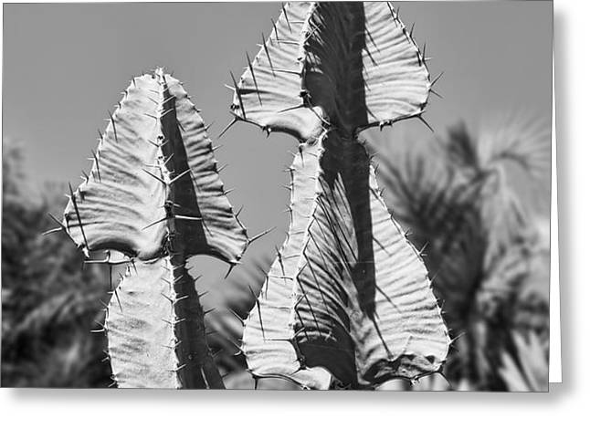 Twin Towers BW Greeting Card by Kelley King