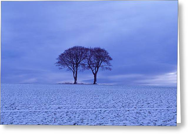 Wide Open Greeting Cards - Twin Trees In A Snow Covered Landscape Greeting Card by Panoramic Images