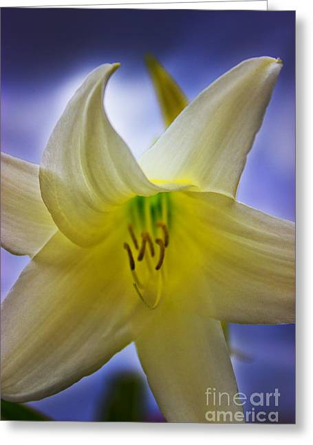 Lily Stamen Greeting Cards - Twinkle Twinkle Little Star Greeting Card by Al Bourassa