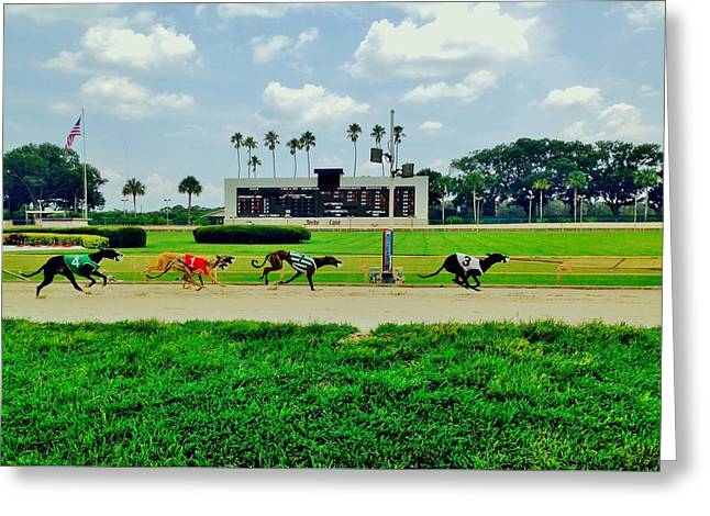Greyhound Photographs Greeting Cards - Twinkletoes Greeting Card by Benjamin Yeager