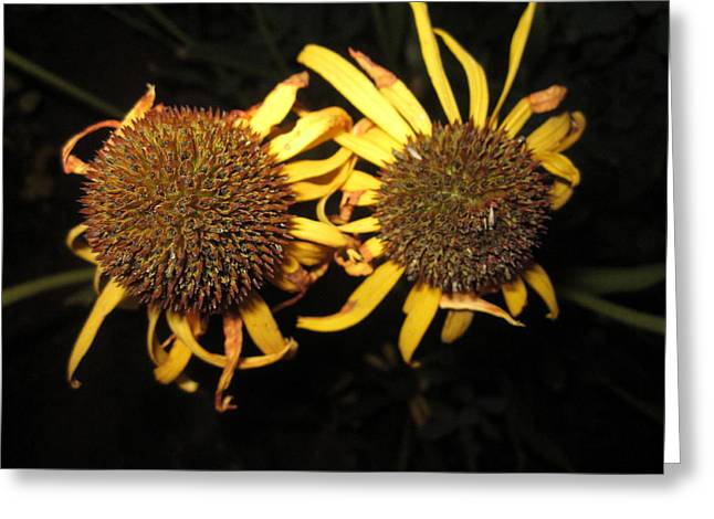 Close Focus Nature Scene Greeting Cards - Twins Greeting Card by Mike Podhorzer