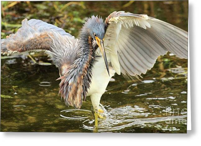 Tri-colored Heron Greeting Cards - Twist And Fish Greeting Card by Adam Jewell