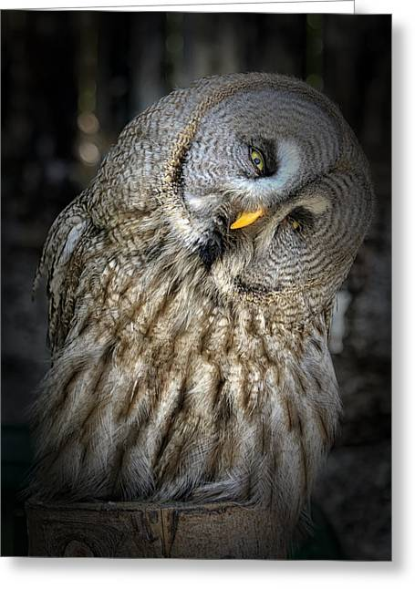 Lovely Owl Greeting Cards - Twist of the Head Greeting Card by Mountain Dreams