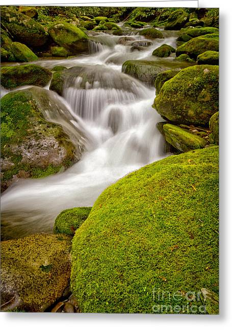 Moss Green Greeting Cards - Twist Greeting Card by Todd Bielby