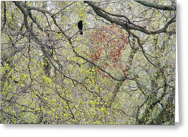 Crows In Trees Greeting Cards - Twisted Branches Greeting Card by Gothicolors Donna Snyder