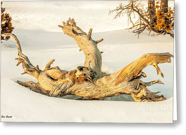Sue Smith Greeting Cards - Twisted Dead Tree Greeting Card by Sue Smith