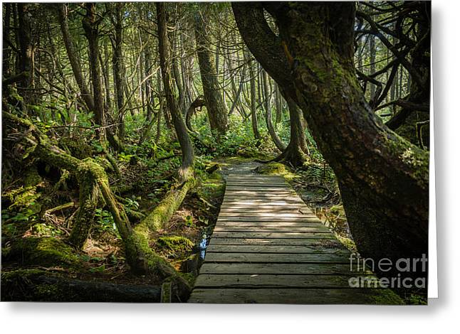 Port Renfrew Greeting Cards - Twisted Forest Greeting Card by Carrie Cole