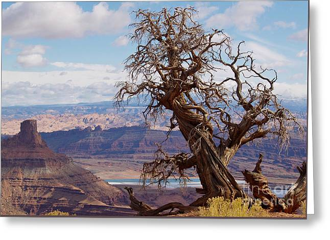 Dead Horse Point Greeting Cards - Twisted Juniper Tree at Dead Horse Point Greeting Card by Alex Cassels