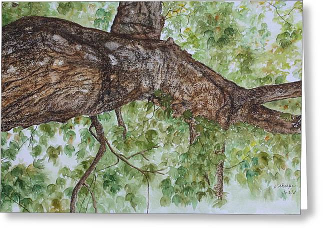 Patsy Sharpe Greeting Cards - Twisted Maple Greeting Card by Patsy Sharpe
