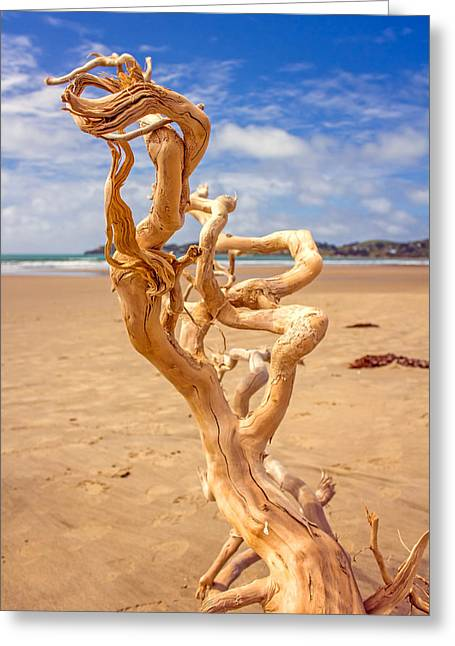 Gnarly Greeting Cards - Twisted Greeting Card by Nicholas Blackwell