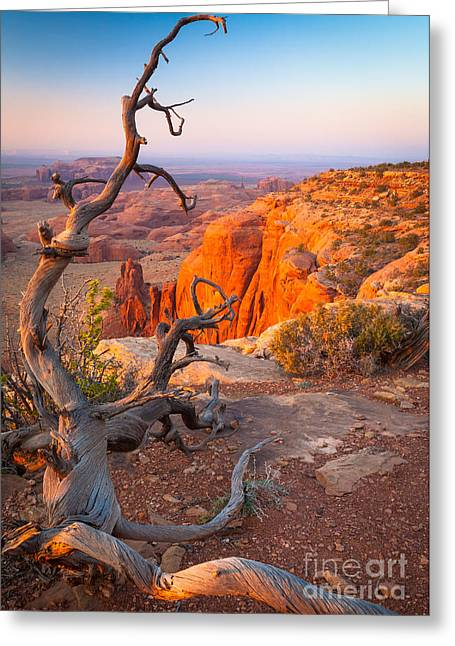 Southwest Usa Greeting Cards - Twisted Remnant Greeting Card by Inge Johnsson